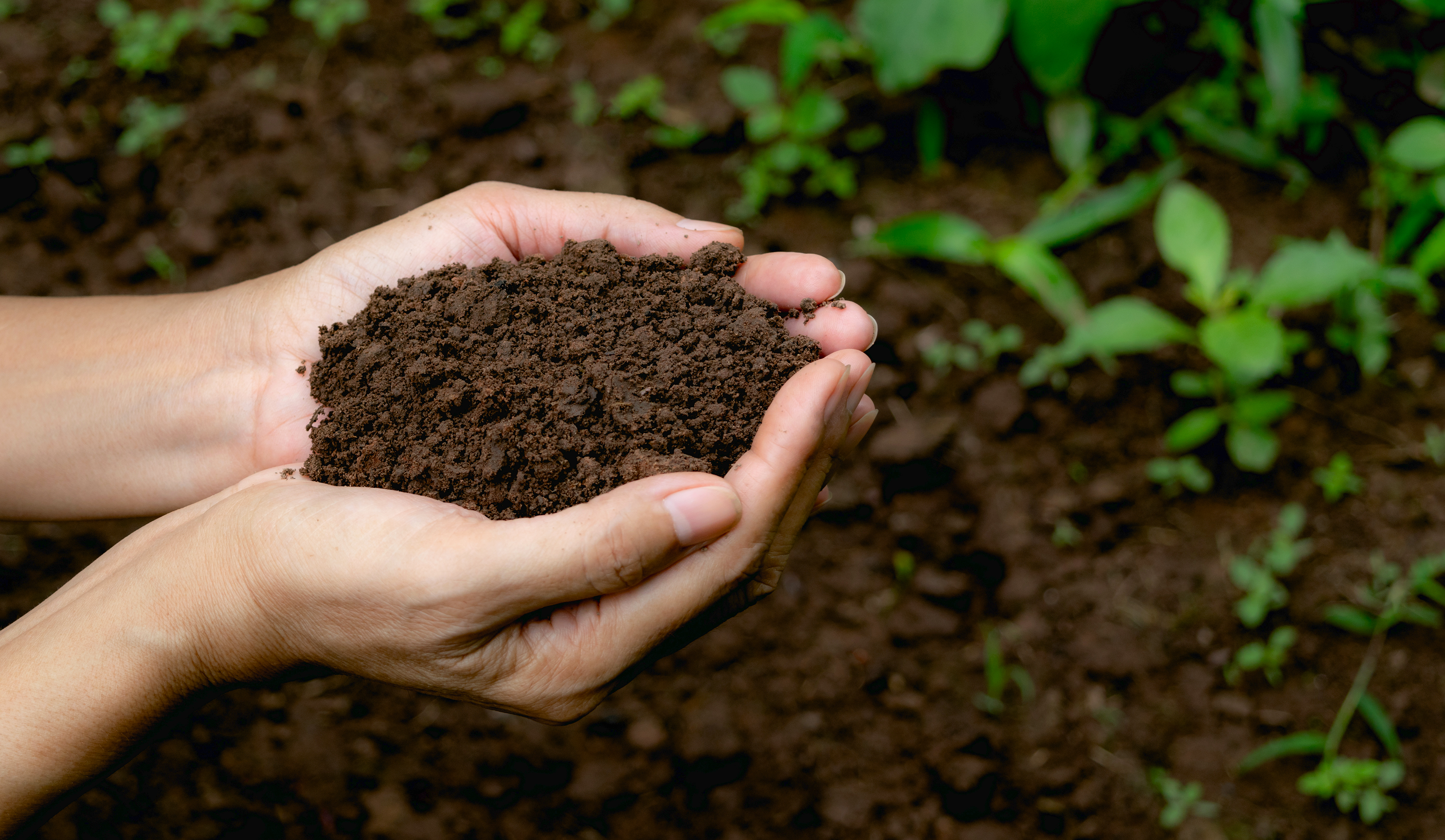 SAPs eventually incorporate into the organic, humic portion of soil after multiple decades